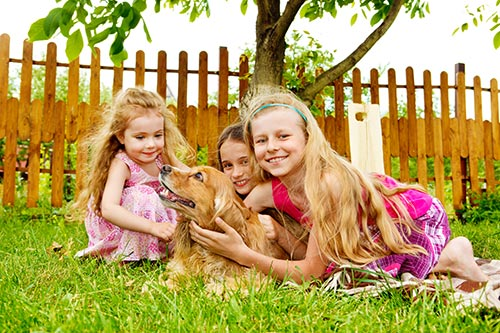five-more-breeds-of-dog-great-for-families.jpg