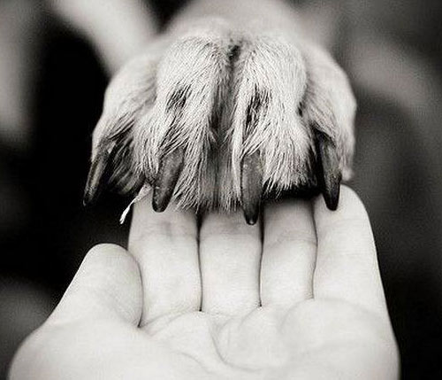trimming-your-dogs-nails.jpg