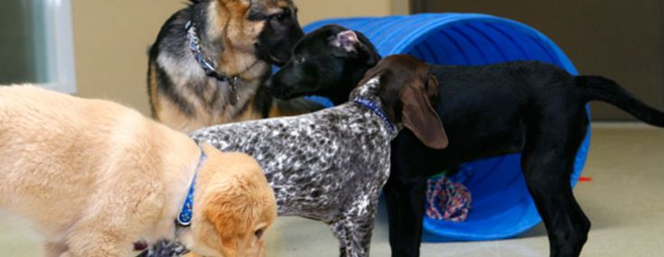 Learn why socializing young puppies is so important.